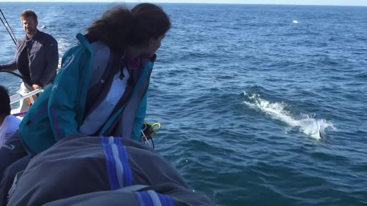 Slomo shot of Martine watching dolphins jumping near them. Simeon steers.